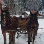 Lowman ID sleigh rides