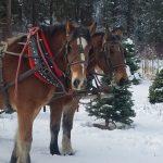 Lowman Idaho Sleigh Rides